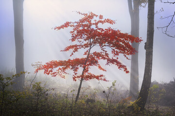 Mystical foggy forest during autumn