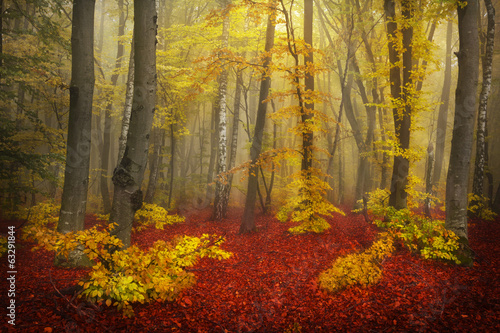 Mystical goggy forest during autumn