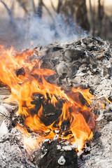Fire flames around black tree log