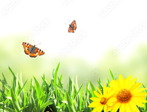 Green grass and butterflies