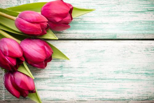 In de dag Bloemen Tulip.