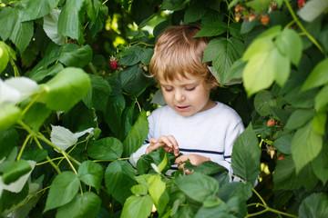 Happy little toddler boy on pick a berry farm picking strawberri
