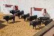 Toros De Lidia En El Corral