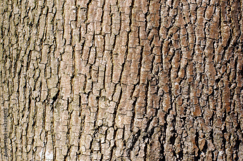 Brown tree bark texture in landscape orientation