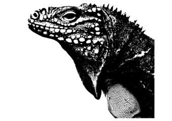 illustration of a lizard