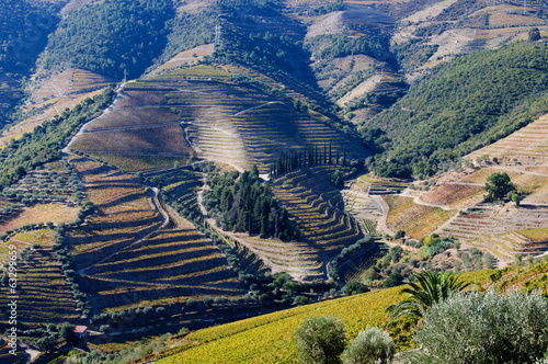 Vineyards in Douro Valley,Portugal