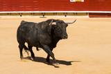 Toro De Lidia Español