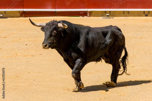 Fotobehang Stierenvechten Toro De Lidia Español