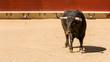 Toro De Lidia Español - 63301009