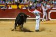 Concurso De Recortes A Toros De Lidia - 63302075