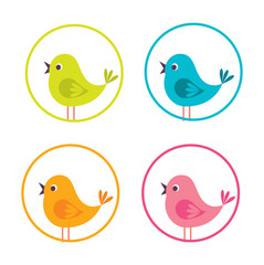 birdie design