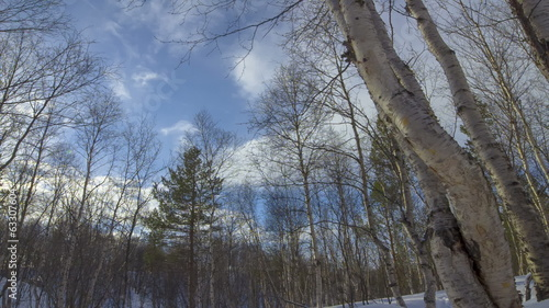 Spring forest and Clouds In Time Lapse