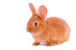 Baby bunny isolated on white background