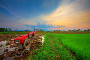 Red power tiller in rice field