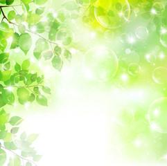 新緑 空 風景