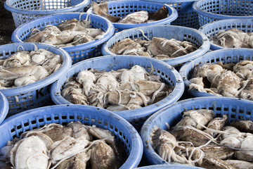 stack of fresh squid in basket sold in fish dock market
