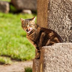streunende Katze leckt sich die Lippen