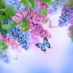Branch of lilac blue and pink butterfly