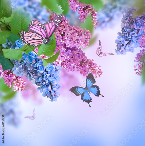 In de dag Lilac Branch of lilac blue and pink butterfly