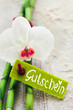 Phalaenopsis orchid, fresh bamboo and a label