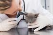 Vet examining ear of kitten