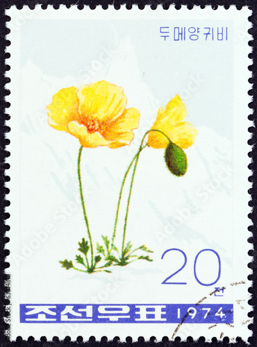 Opium poppy, Papaver somniferum (North Korea 1974)