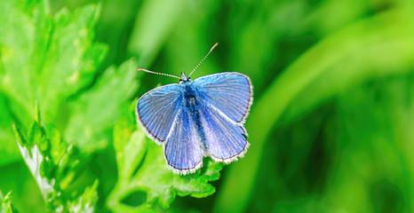 Голубой мотылёк