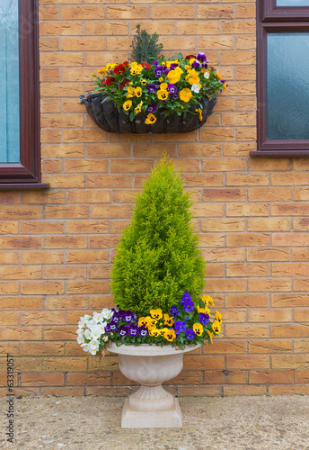 Fotobehang Pansies Container and hanging basket with spring winter flowering pansie