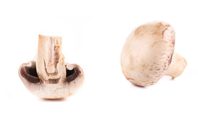 White mushrooms close up.