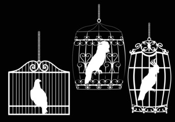 collection of birds in cages on black