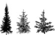 three fir silhouettes isolated on white