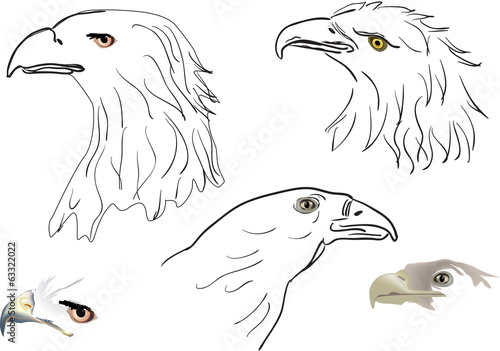 five eagle head sketches isolated on white