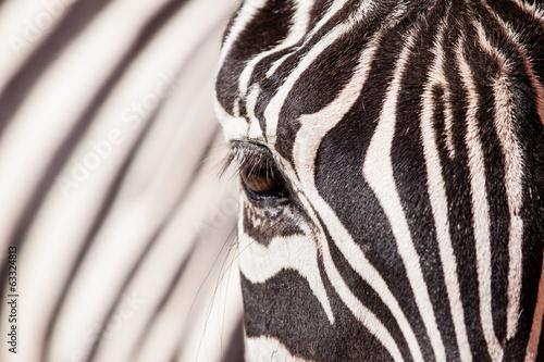 Aluminium Meest verkochte foto's Zebra portrait