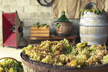 grapes in a vat making equipement on the background