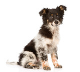 young mixed breed dog looking at camera. isolated on white