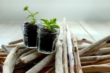 Herbage & sticks