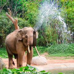 Elephant make water spray - Nature shower