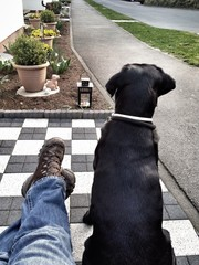 beine und Hund vom Haus