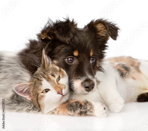 close-up dog with cat together. isolated on white background