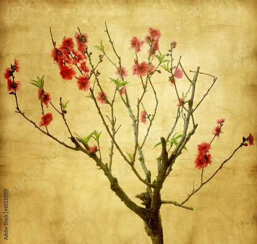 plum blossom on old antique vintage paper background