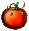 Tomato vintage woodcut illustration