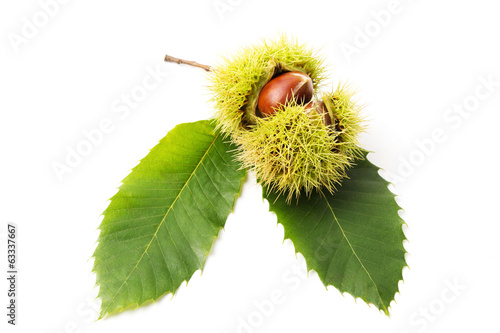 Chestnuts close-up