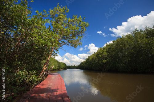 Nature trails In Mangrove forest with blue sky