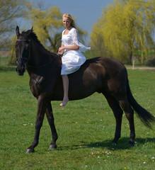 la belle au cheval