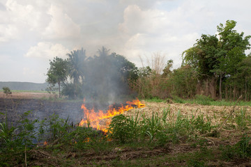 Fire burning dried grass field caused air pollution