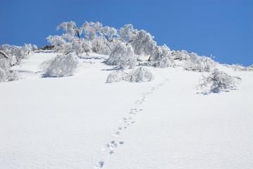 雪原の輝き