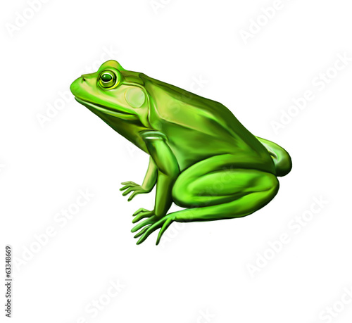 Green frog side view, Isolated on white