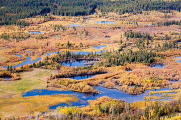Wetland marsh ponds fall boreal forest taiga Yukon