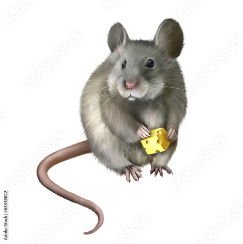 House mouse eating piece of cheese