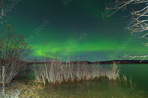 Aurora borealis display Lake Laberge shore willows